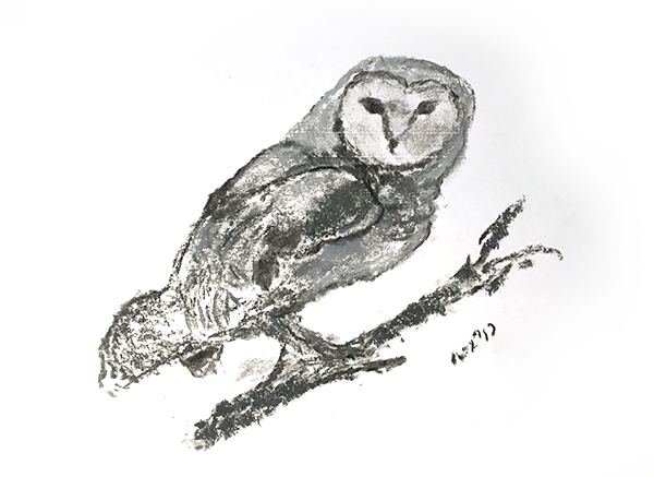 A pencil drawing of an owl