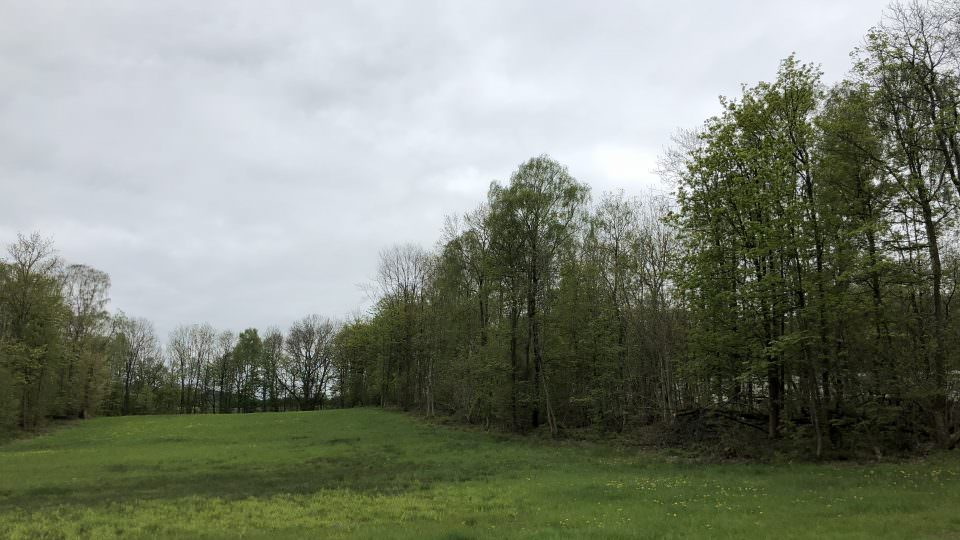 One of our undulating fields with lush green grass edges the Wyre Forrest. The tall trees edge the view to the right and ahead in the distance. The sky is cloudy.