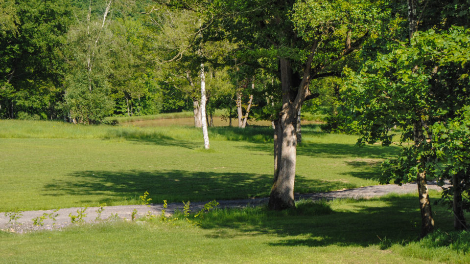 Four Silver Birch trees on a grassy slope. A fishing pool. Tall trees in the distance.