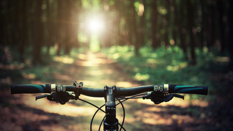 This is a view taken from a bicycle riding down into the Wyre Forest. The bicycles handlebars are captured in the photo as is the forest trail which is being ridden.