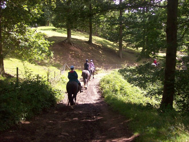 A group horse riding, they are heading down a trail into the Wyre Forest.