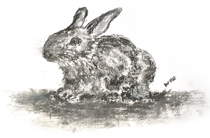 A charcoal drawing of Lodge Coppice's resident, small grey rabbit nibbles clover