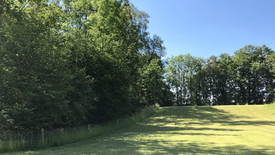 This well mowed paddock on the edge of Lodge Coppice has a slight incline, there are long shadows stretching across the grass from a coppice of young trees which edge the field.
